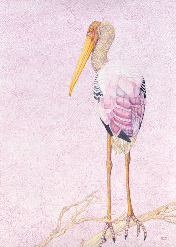 """""""Painted Stork"""" Watercolor, 20"""" x 28"""" by artist Judy Boyd. See her portfolio by visiting www.ArtsyShark.com"""