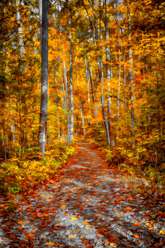 """""""Ohiopyle Trail"""" Photography, Various Sizes by artist Robert Lott. See his portfolio by visiting www.ArtsyShark.com"""