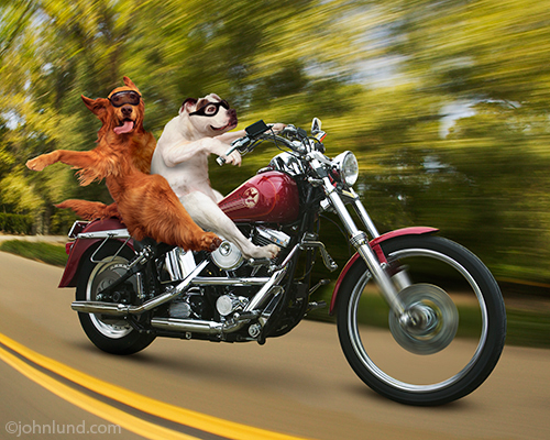 Motorcycle Dogs