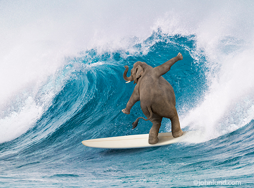 Surfing Elephant whimsical photo