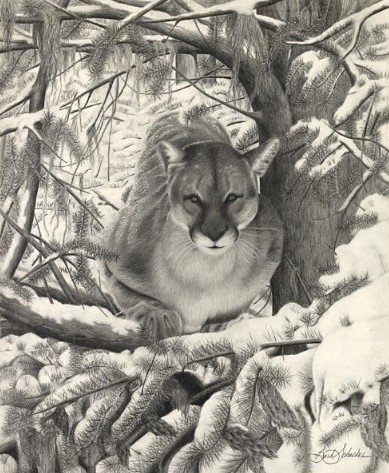 """Mountain Lion Hideout"", Graphite Pencil Drawing, 14"" x 17"""