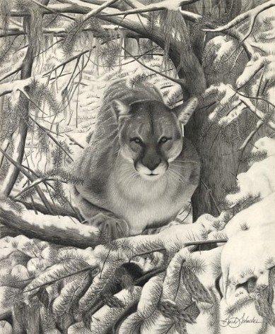 """Mountain Lion Hideout"", Graphite Pencil Drawing, 14"" x 17"""