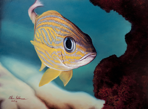 """French Grunt"" Oil On Canvas, 30"" x 40"" b artist Alan Feldmesser. See his portfolio by visiting www.ArtsyShark.com"