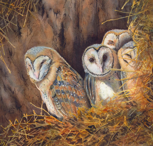 """Curiosity"" Watercolour, 38cm x 39cm by artist Christelle Grey. See her portfolio by visiting www.ArtsyShark.com"