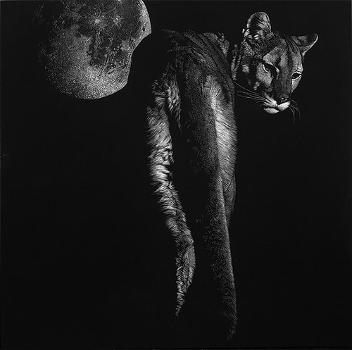 """Seduction"" Scratchboard, 24"" x 24"" by artist Julie Chapman. See her portfolio by visiting www.ArtsyShark.com"