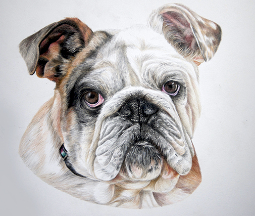 Bulldog portrait by Jeannette Sirois. See her portfolio by visiting www.ArtsyShark.com