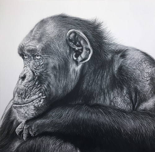 """Ken"" Pencil on Bristol Board, 65cm x 65cm by artist Carla Grace. See her portfolio by visiting www.ArtsyShark.com"