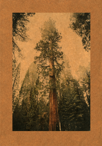 """Sequoia"" from the ""Songs of Absolution"" series by Lawrence and Kuhlmann. Read about these artists at www.ArtsyShark.com"