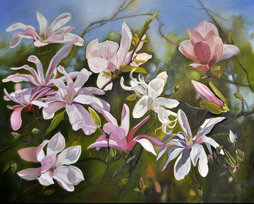 """Chinese and Cup Magnolias"" Oil on Canvas, 30"" x 24"" by artist Lola Stanton. See her portfolio by visiting www.ArtsyShark.com"