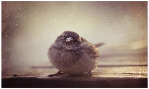 """Sparrow"" Photography, Various Sizes by artist Marina de Wit. See her portfolio by visiting www.ArtsyShark.com"