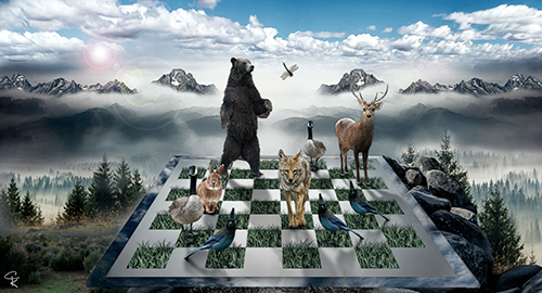 """Tahoe Checkmate"" Digital Photography, Varied Sizes by artist Catherine King. See her portfolio by visiting www.ArtsyShark.com"