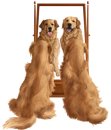 """Golden Retrievers at Mirror"" Dog food package illustration of two golden retrievers admiring themselves in a mirror, Photoshop, Various Sizes by artist Trevor Keen. See his portfolio by visiting www.ArtsyShark.com"
