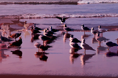 Photograph of seagulls on the beach by Tom Kostes