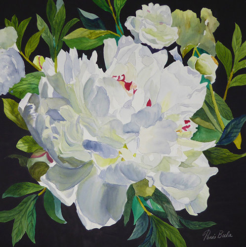 Watercolor painting of a white peony by Tanis Bula