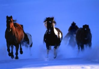 Photograph of a herd of horses running through the moonlit snow by Christopher Marona