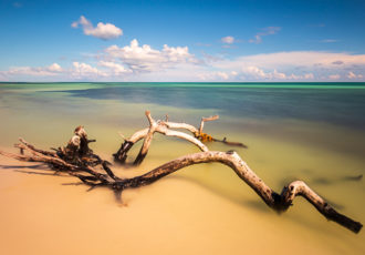 """Driftwood on Bahia Honda Beach (Florida Keys)"" Photography by Stefan Mazzola"