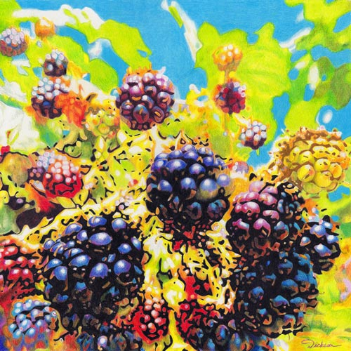 color pencil drawing of blackberries by Rhonda Dicksion