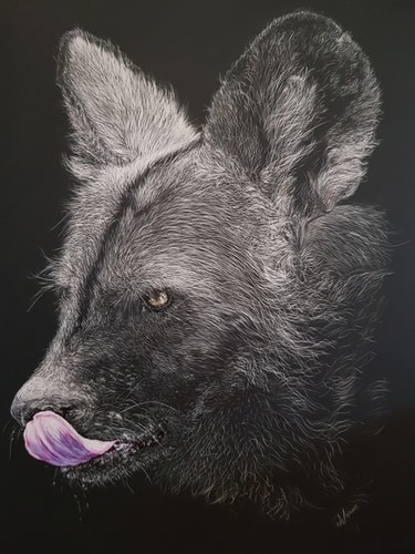 scratchboard art of an African Painted Wolf by Jan Lowe