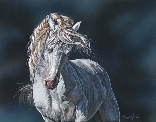 pastel of a white horse on a blue background by Lynette Orzlowski