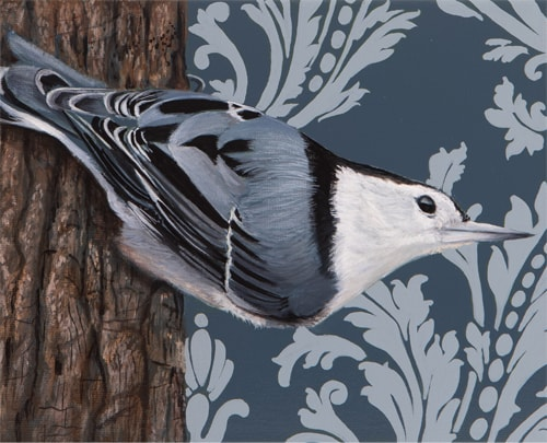 painting of a White Breasted Nuthatch by Sabra Crockett