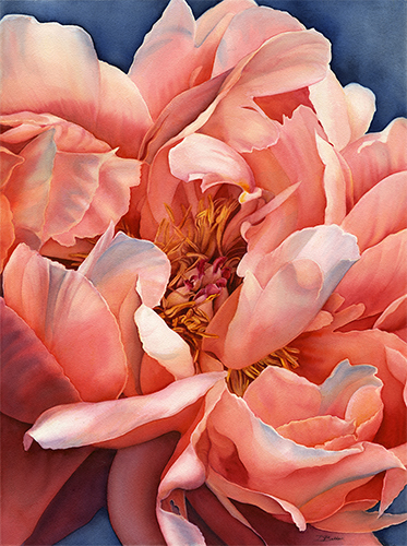 watercolor of a peach colored peony by Debbie Bakker