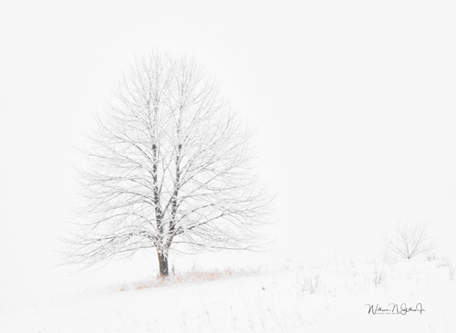 abstract photograph of a tree in winter by William Gillis