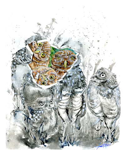 painting of owls by Amber Moran
