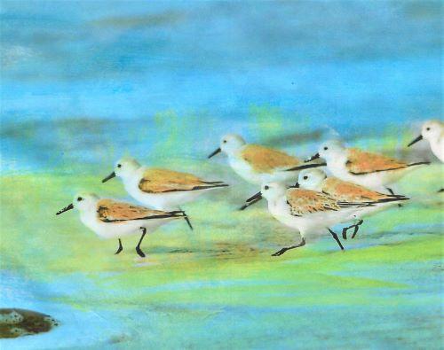 painting of sandpipers by Deborah Ann Baker
