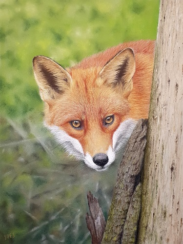 pastel painting of a red fox by Ivan Jones